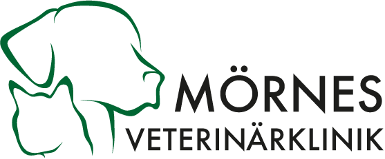 veterinär i Landskrona, smådjursklinik, hundens och kattens sjukdomar, ögonlysning